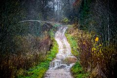 Wet forest road. Forest road path in late fall with bare trees Royalty Free Stock Photography