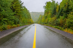 Wet Forest Road Stock Photos