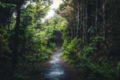 Wet forest trail. Image of a wet forest trail Stock Image