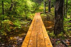 Wet Forest Walkway Stock Photos