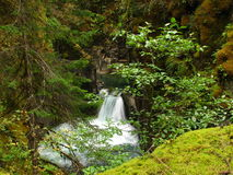 Wet Forsest Oaisis. A waterfall in Little Quallicum River Provincial Park on Vancouver Island British Columbia royalty free stock images