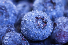 Wet Fresh Blueberries Berries Royalty Free Stock Photos