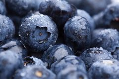 Wet fresh Blueberry background Stock Image