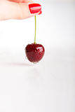 Wet fresh juicy single cherry Royalty Free Stock Photography