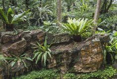 Tropical thicket landscape Royalty Free Stock Photos