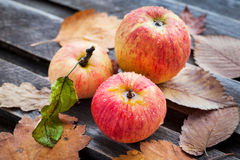 Wet fresh red apples in the garden Royalty Free Stock Photography