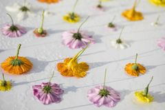 Wet Garden Flower Tops on White stock photos