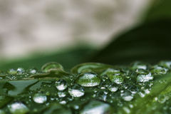 Wet garden plant leaf Royalty Free Stock Photography