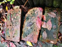 Wet garden rocks. A wet garden rocks with leaves Stock Photography