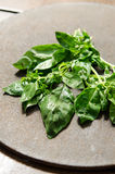 Wet genovese basil Royalty Free Stock Images