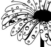 Wet Gerbera. Floral vector design, handmade wet style Stock Images