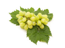 Wet grape Stock Photo