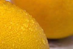 Wet grapefruit texture Royalty Free Stock Image