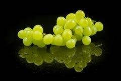 Wet grapes Stock Photo