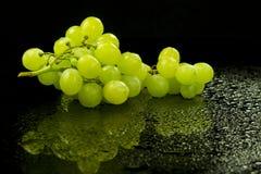 Wet grapes Stock Photos
