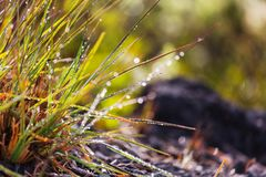 Wet grass Stock Photography