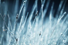 Wet grass. In sunny morning Royalty Free Stock Images