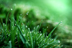 Free Wet Grass Royalty Free Stock Image - 13096406