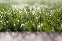 Wet grass. Narrow depth grass with bokeh shadowing cement Royalty Free Stock Image
