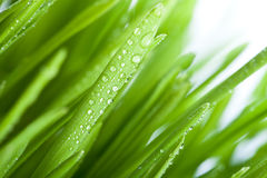 Wet grass Stock Image