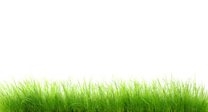 Wet grass. A high resolution shot of wet grass on white background Stock Photo