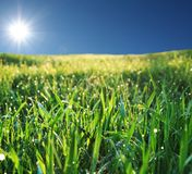 Wet grass. And sunny sky Royalty Free Stock Photos