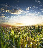 Wet grass. On the sunrise Stock Photography