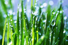 Wet grass. On blur background Royalty Free Stock Photo
