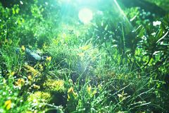 Wet grass Stock Image