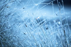 Wet grass Stock Photography