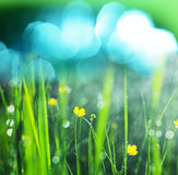 Wet grass Stock Images