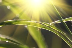 Wet grass Stock Photo