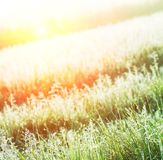 Wet grass Royalty Free Stock Image