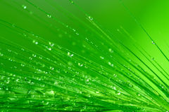 Wet grass. Macro of grass spikes with water drops on green background royalty free stock photo