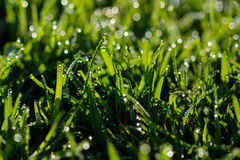 Free Wet Grass Stock Photos - 56786393