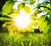 Wet grass. And leaves for sun Stock Photography