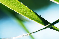 Wet grass. In the garden Royalty Free Stock Images