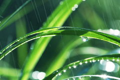 Wet grass. On rain background Royalty Free Stock Photo