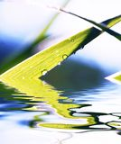 Wet grass. And its reflection Royalty Free Stock Photo