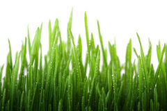 Free Wet Grass Stock Photography - 8259232