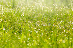 wet grass royalty free stock photo