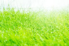 Wet grass closeup. Royalty Free Stock Images