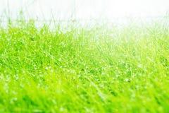 Wet grass closeup. Wet grass closeup with lush green selective focus farm land Royalty Free Stock Images