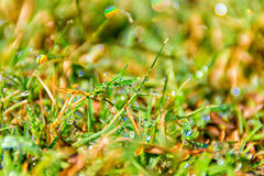 Wet grass closeup Stock Image