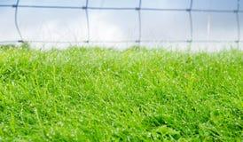 Wet grass closeup. Wet grass closeup with lush green selective focus farm land Royalty Free Stock Photos