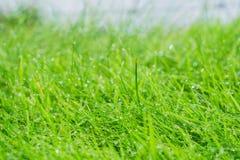 Wet grass closeup. Wet grass closeup with lush green selective focus farm land Stock Photo