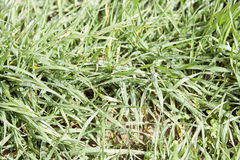 Wet grass. Detail of plants wet with rain Royalty Free Stock Photos