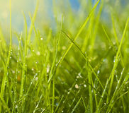 Wet grass. With drops in backlight Stock Photos