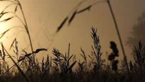 Wet grass early in the morning on a meadow stock footage
