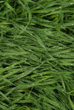 Wet grass Stock Photos